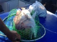 SA fishing trips