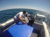 adelaide tuna fishing charter