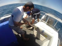 adelaide tuna fishing trips