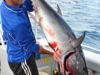 big tuna fishing trips
