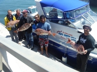 go get em fishing charters adelaide