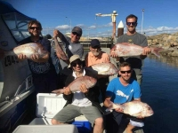 snapper fishing adelaide sa