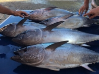 tuna fishing trip adelaide