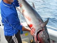 big tuna fishing trips