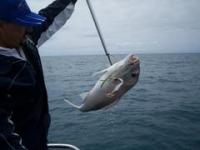 deep sea fishing adelaide