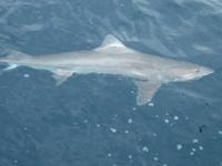 deep sea fishing charters south australia